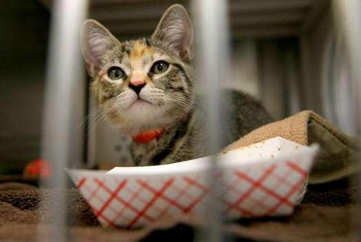 A Feline Rescued From Irma