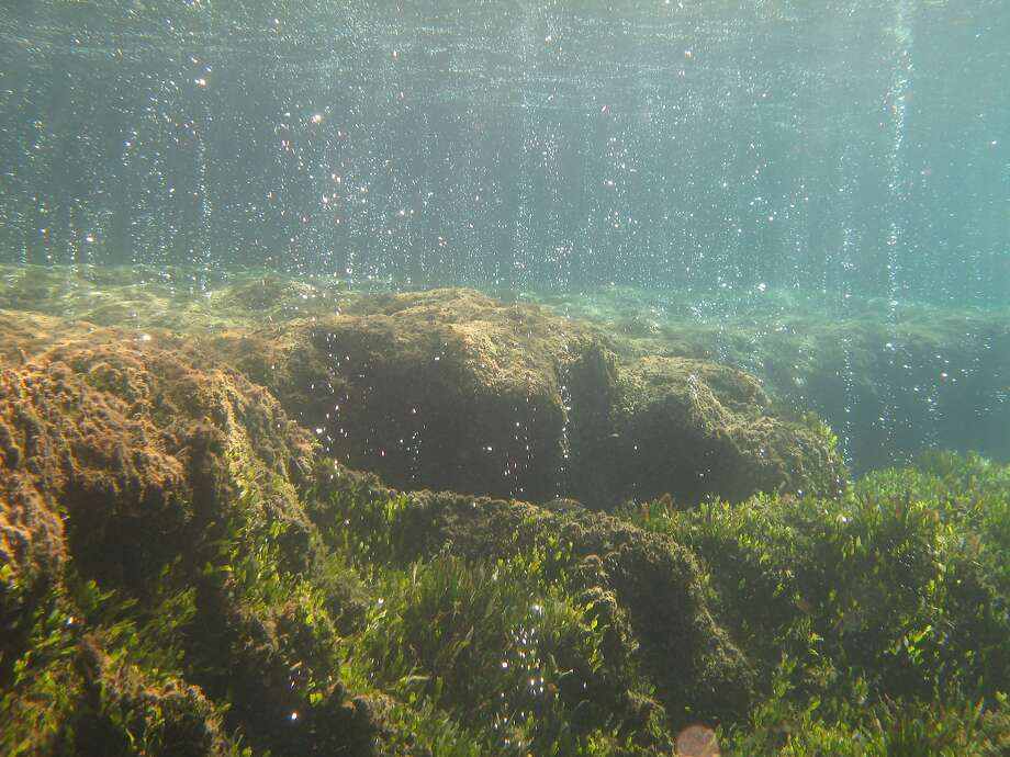 Carbon dioxide emitted from the vents is dropping the pH of the Mediterranean Sea water off the coast of Italy. As the water becomes more acidic, mollusks develop paper-thin shells and sea grass and algae invades. Photo: Kristy Kroeker, UC Santa Cruz