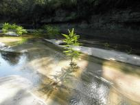 960x720 toward the end, the water got so shallow weeds were growing midstream in places, in Alapaha, by Bret Wagenhorst, 1 September 2014
