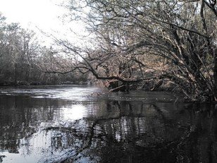 600x450 Oak reflections just below power line, in Statenville to Sasser Landing on the Alapaha River, by John S. Quarterman, for WWALS.net, 15 February 2015