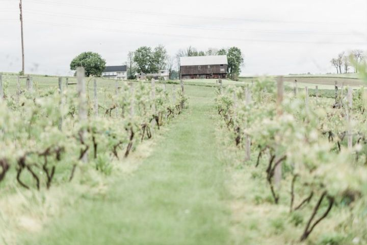 23 Winery Wedding Ideas For Anyone Getting Married At A Vineyard Crazyforus