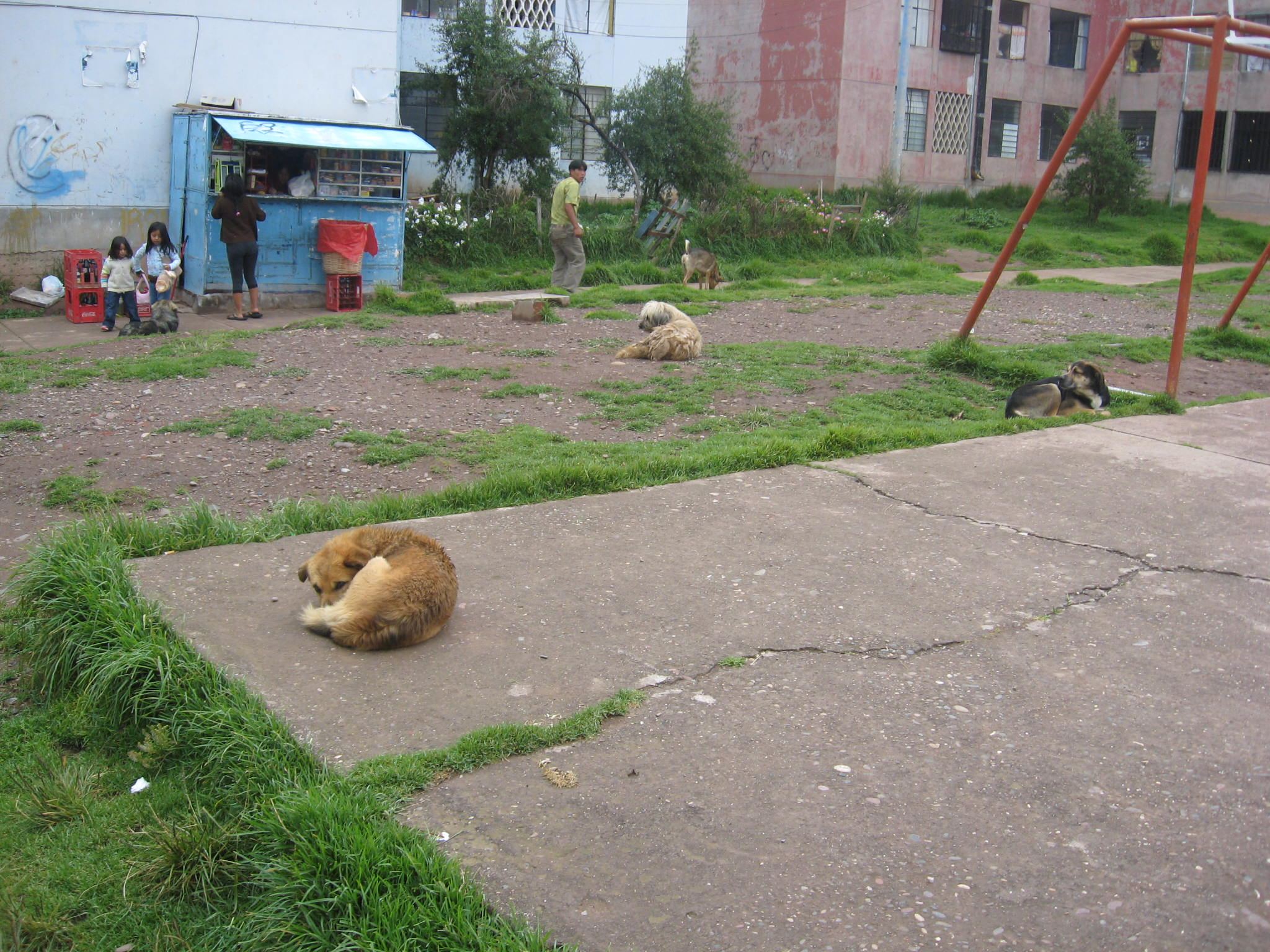 Stray dogs hanging around the park.