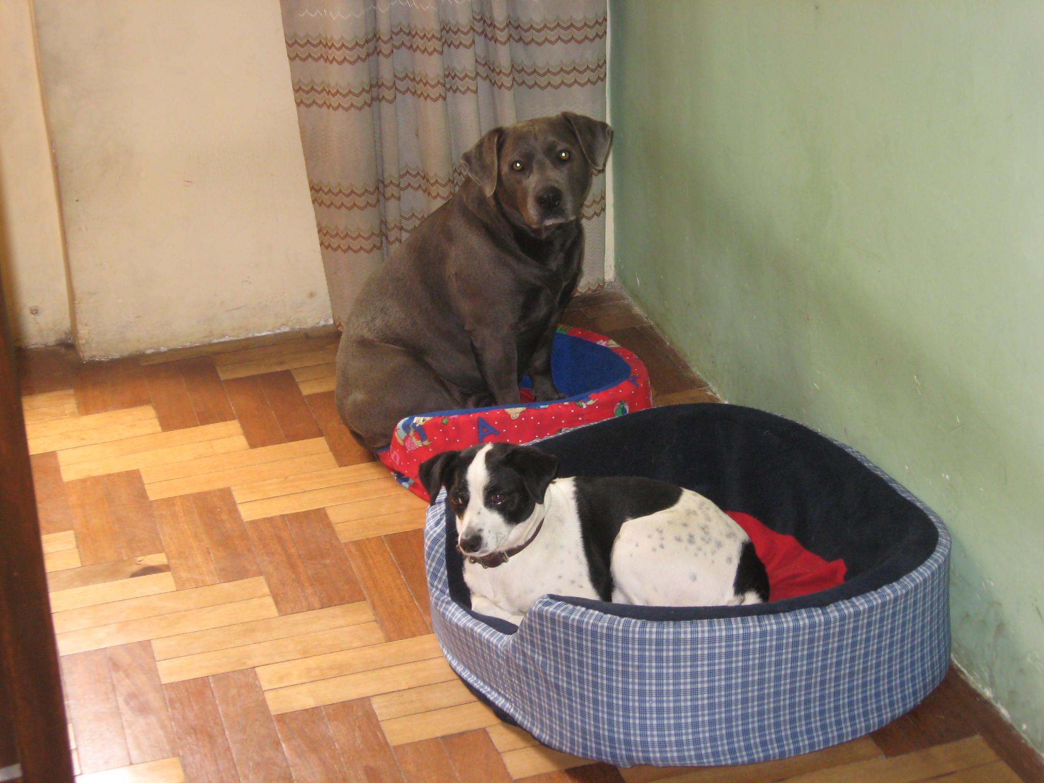 Roxi and Manchita