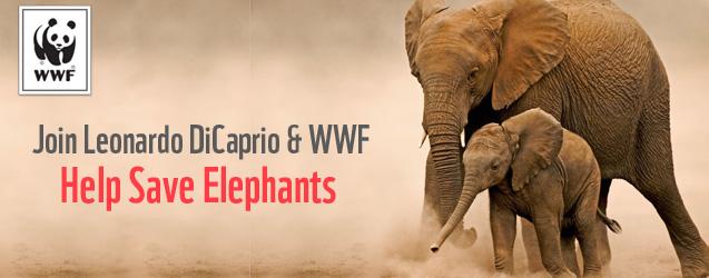 Join Leonardo DiCaprio and WWF to help save elephants