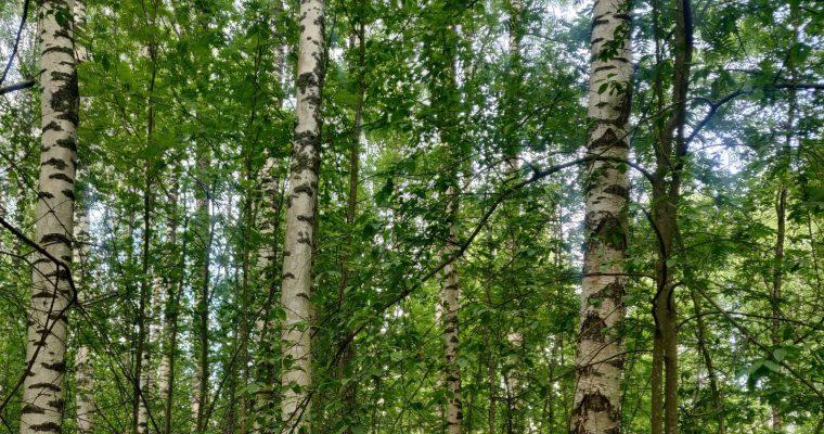 Miksi metsässä seikkailu kannattaa