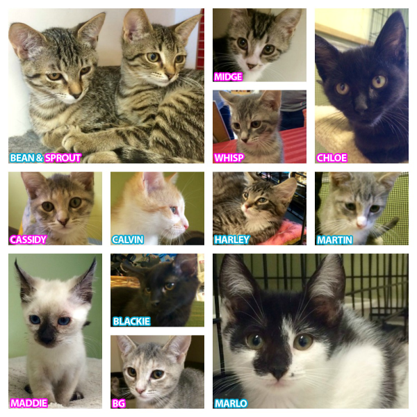 Cats Available for Adoption in St Augustine!