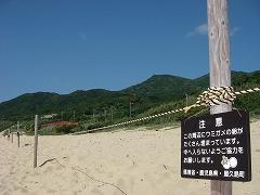 k:子ガメ保護ロープ