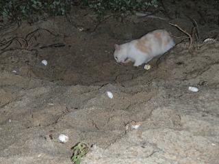 o:巣穴を掘り返す野良猫