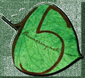 Leaf15-transparent-fullsize