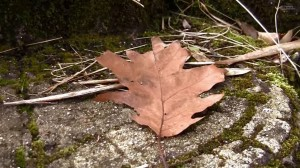 treeandleaf