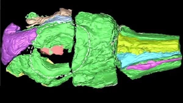 El cráneo hallado mide alrededor de medio metro (Conicet)