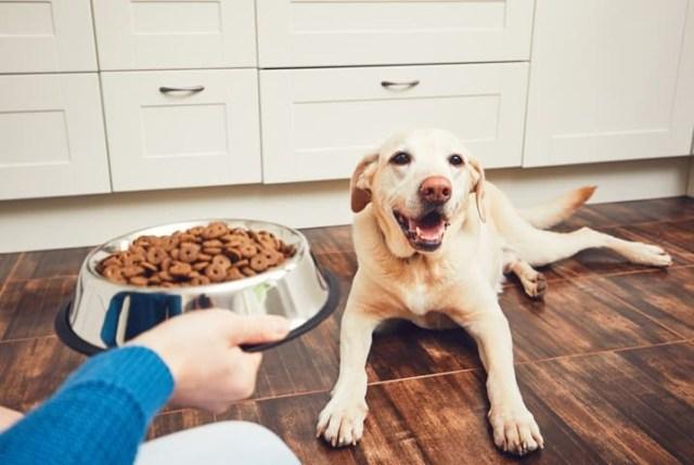 pessoa oferecendo comida ao cão
