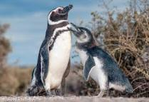 pinguinos00