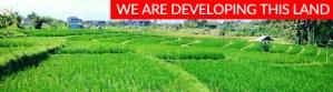 LAND IN DEVELOPMENT IN CANGGU