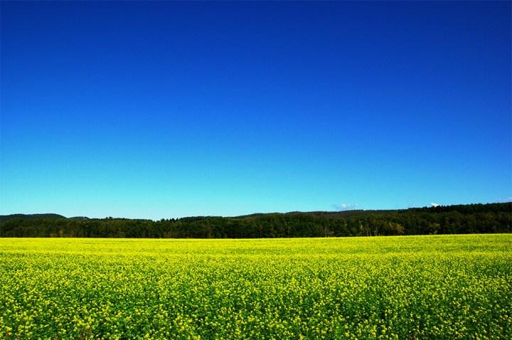 青い空、黄色い大地