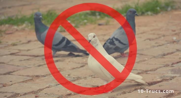 Repulsif Pigeon Repulsif Naturel Et Produit Anti Pigeon