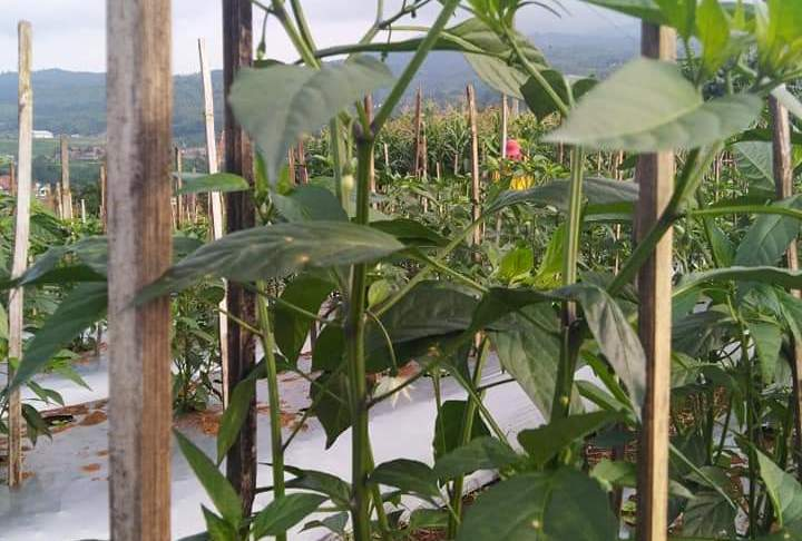 Advantages and Disadvantages of Tank Irrigation