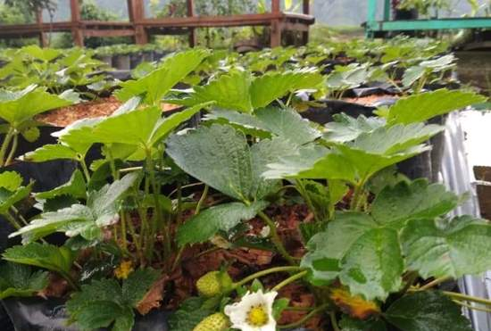3 Types of Drip Irrigation Systems