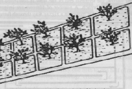 Check basin method of irrigation