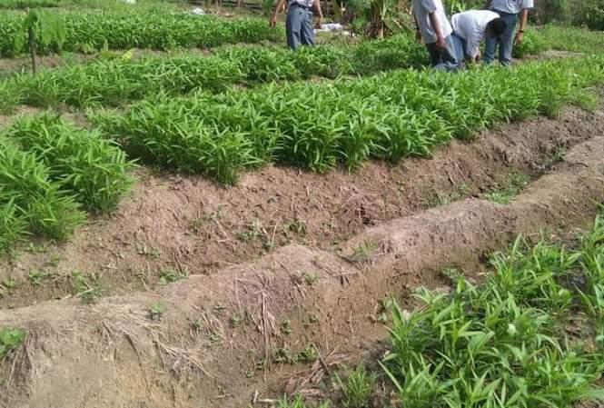 Disadvantages Of Monoculture Farming