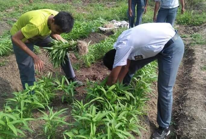 Advantages and Disadvantages of Monoculture Farming