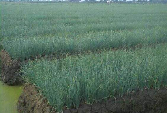 11 Advantages and Disadvantages of Manual Irrigation System
