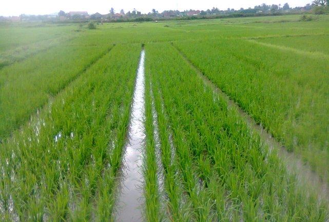 Basin Flooding Irrigation Systems