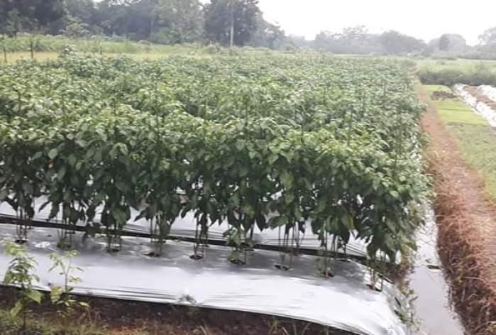 The Advantages and Disadvantages of Contour Irrigation