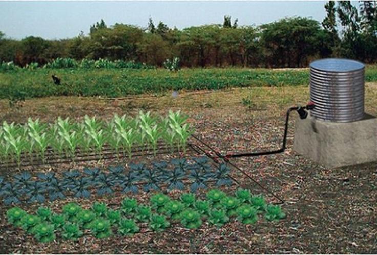 gravity drip irrigation