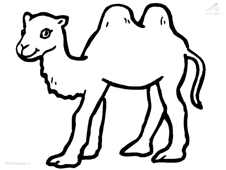 camel coloring page cooloring com