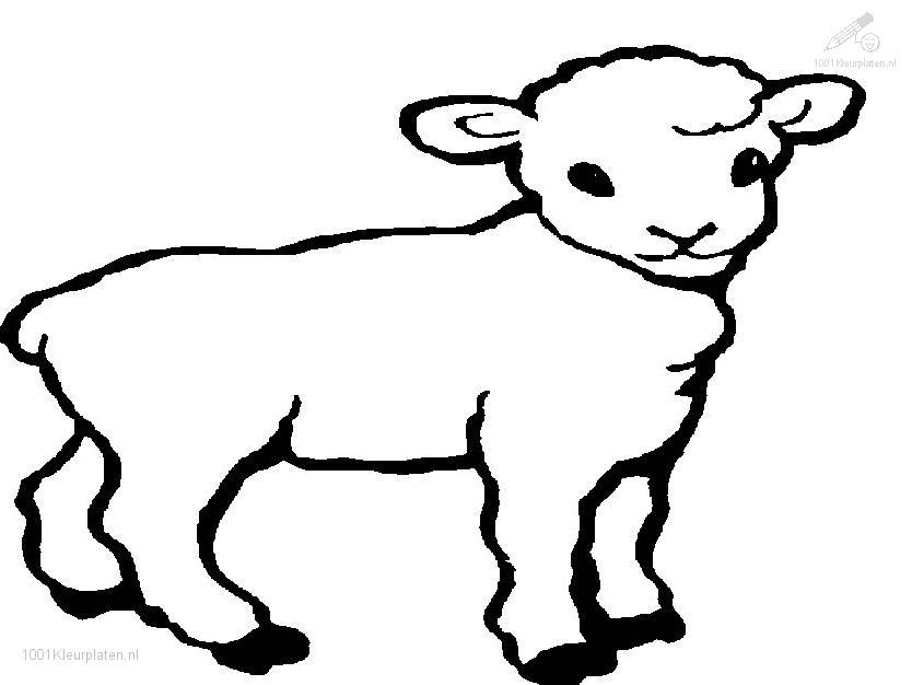 printable coloring pages of lambs cooloring com