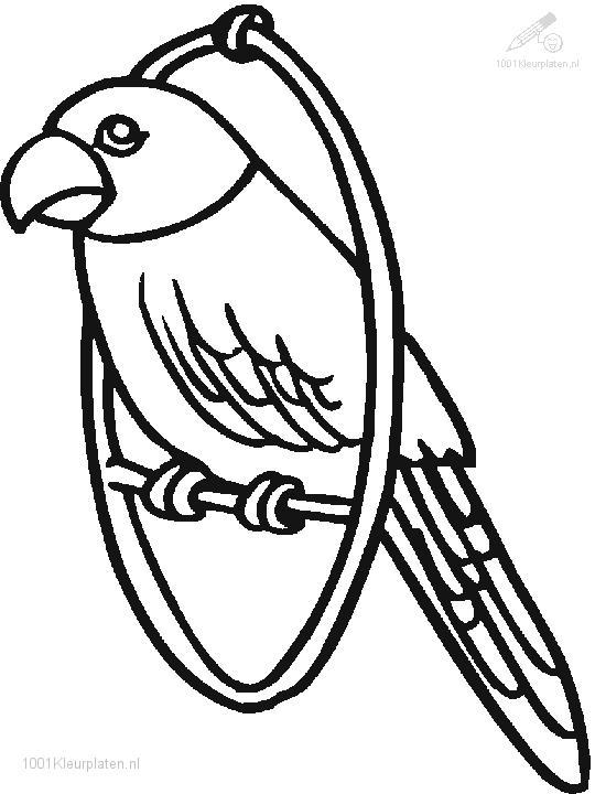 parrot coloring page parrot coloring pages