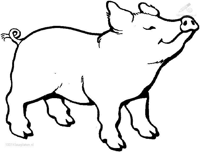 animals gt gt pig gt gt pig coloring page