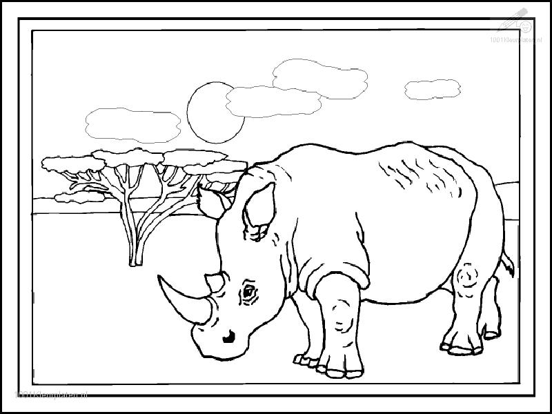 rhinocerous colouring pages page 3