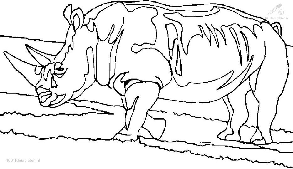 coloring pages of rhino