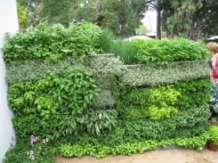 salad-vertical-garden-7