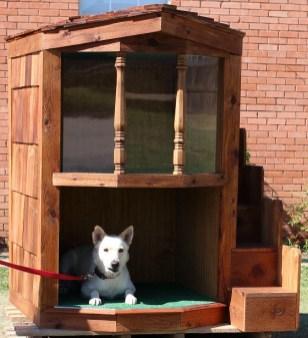 amazing-dog-house-22