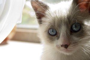 Dit is Iris, een leuke naam voor een kat. 1001kattennamen.nl