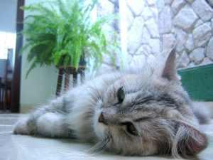 Hendrik, een kattennaam met de letter H, ligt hier lekker te slapen.