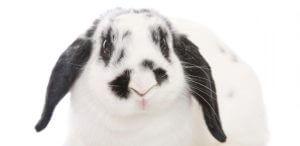 naam konijn, konijnenhok, hok konijn, konijnennamen, 1001konijnnamen