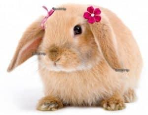 konijnenamen, konijnnaam, naam konijn