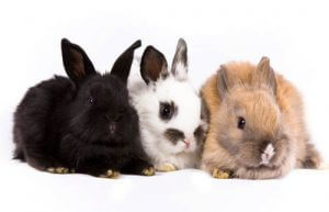 konijnen, konijn, naam konijnen, konijnennamen, unieke konijnennamen