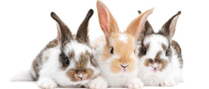 konijnennamen, namen van konijnen, konijnen, top10 konijnennamen