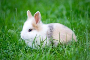 naam konijn, konijnennaam, konijnennamen, konijn, konijnen.
