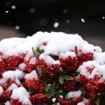 雪が降っていたので撮った。