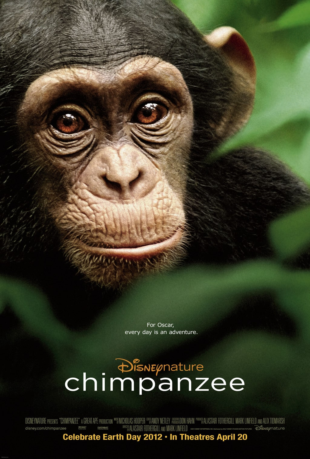 Disneynature S Chimpanzee In Time For Earth Day