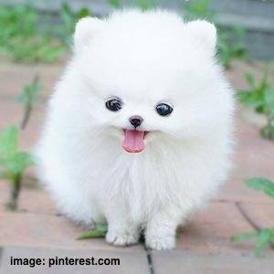 cute-dog-1