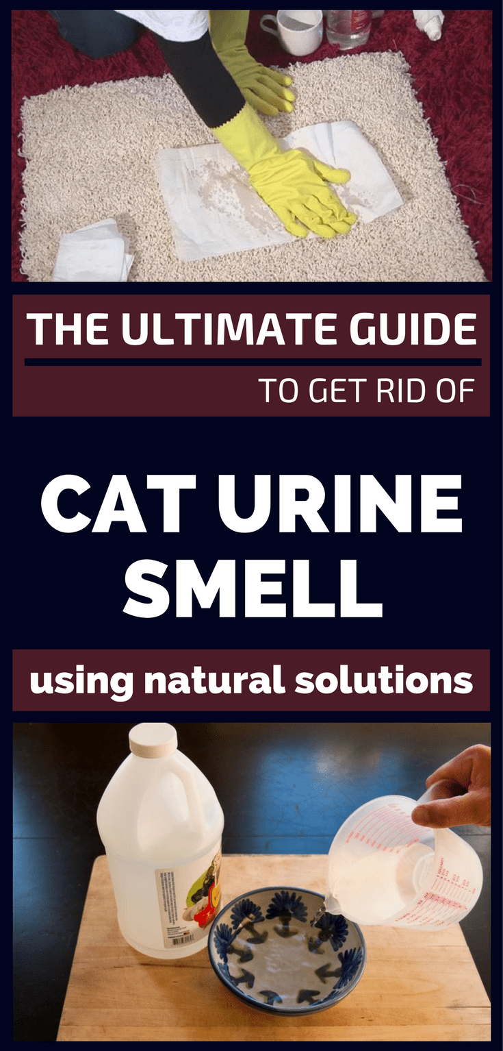 Image Result For How To Get Old Dog Urine Smell Out Of Carpet