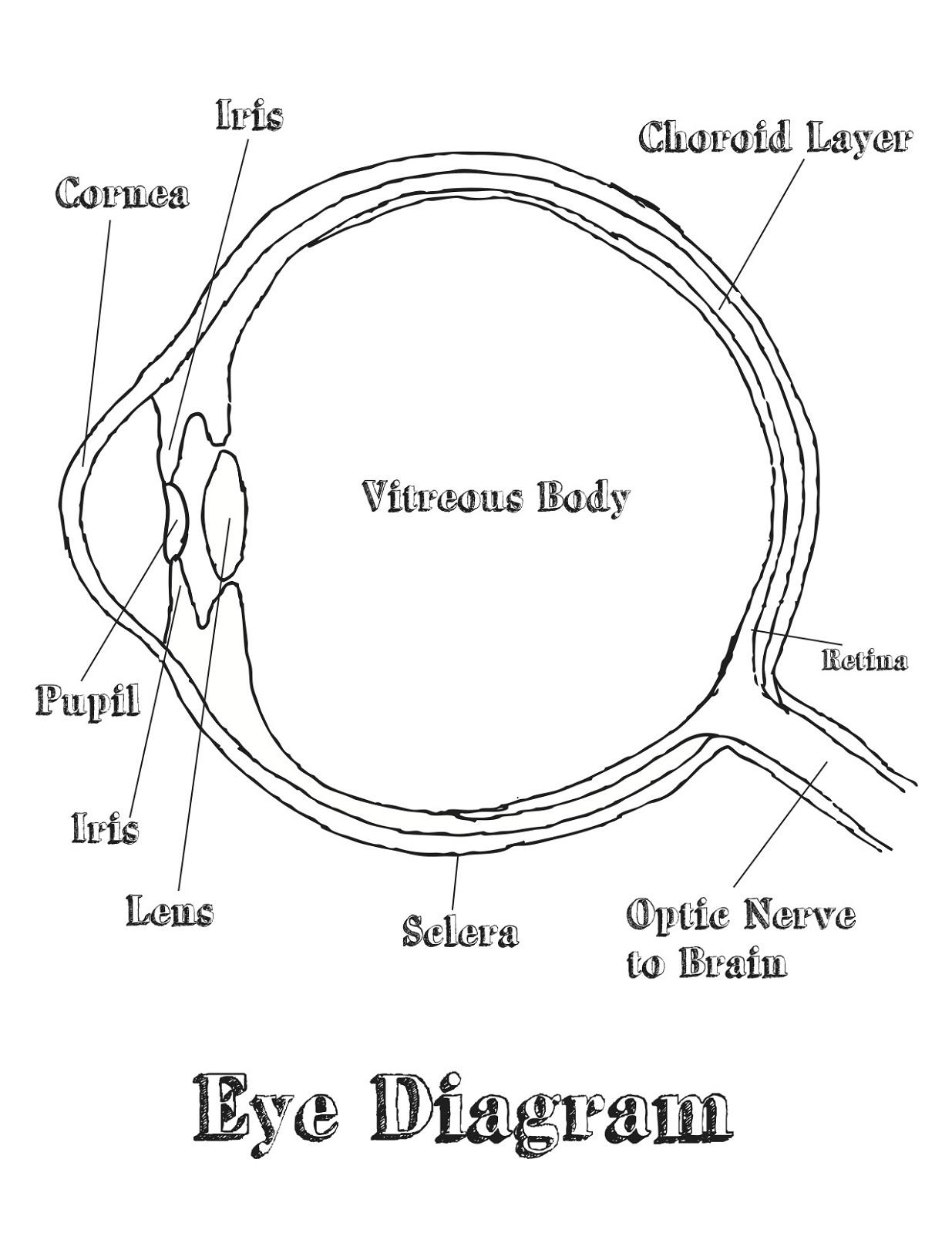 Free And Printable Eye Diagram