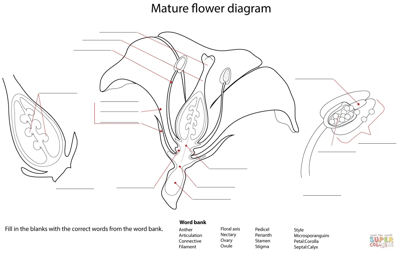 Flower Diagrams Printable